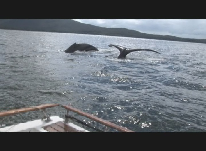 Whales break water during jeff's Alaskan tour.